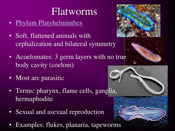 PPT - Worms and Mollus...