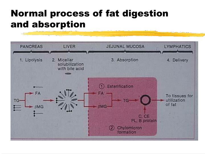 Normal process of fat digestion and absorption