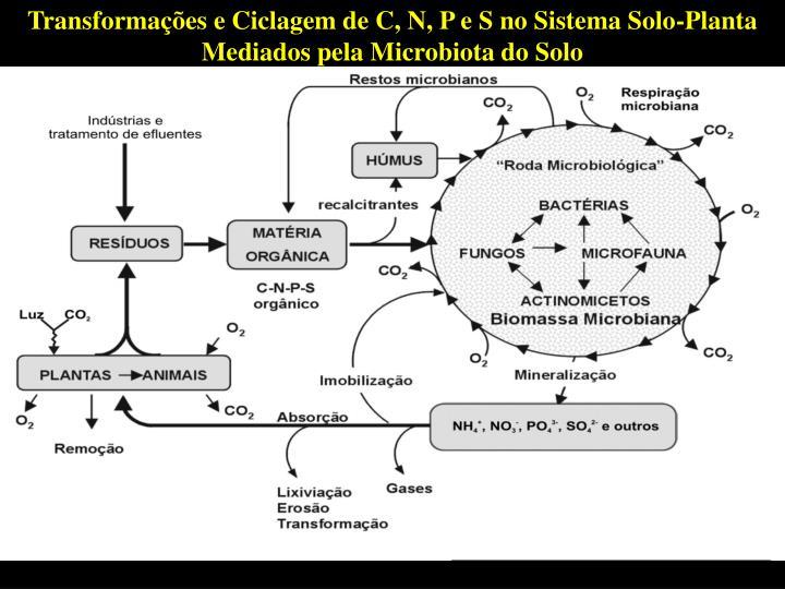 Transformaes e Ciclagem de C, N, P e S no Sistema Solo-Planta Mediados pela Microbiota do Solo