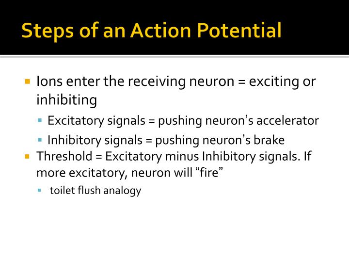 Steps of an Action Potential
