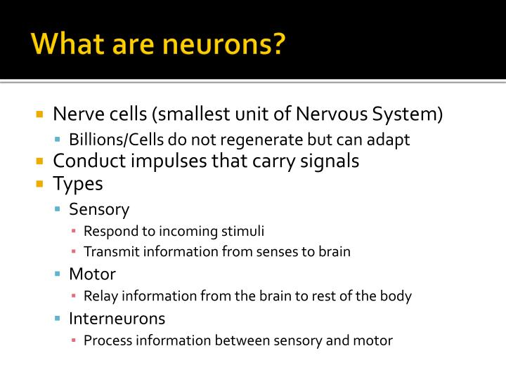 What are neurons?