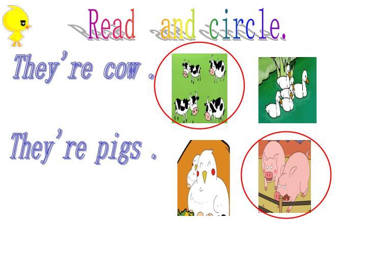 Read  and circle.