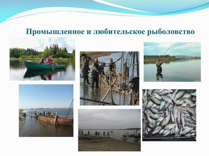 Промышленное и любительское рыболовство