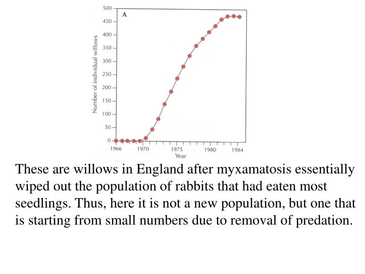 These are willows in England after myxamatosis essentially