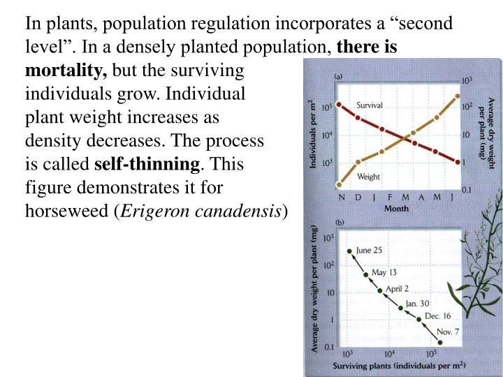 "In plants, population regulation incorporates a ""second"