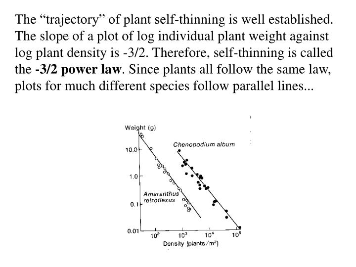 "The ""trajectory"" of plant self-thinning is well established."