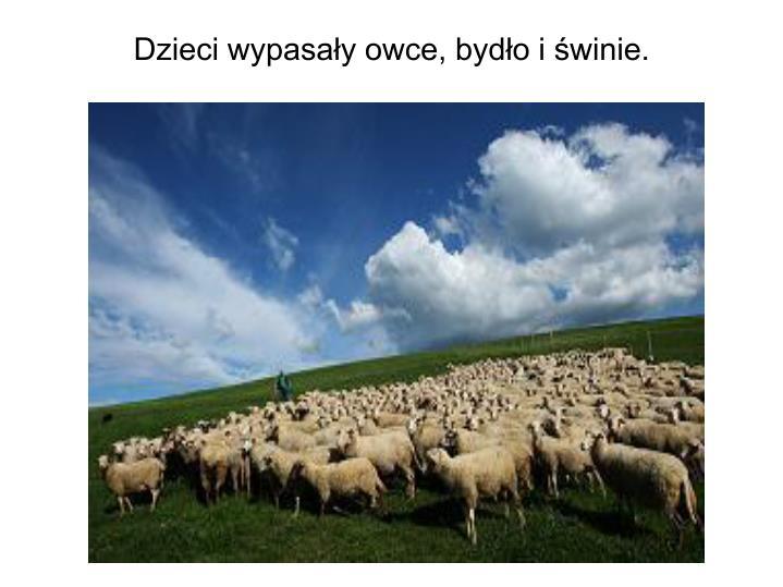Dzieci wypasały owce, bydło i świnie.