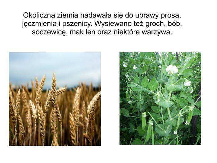 Okoliczna ziemia nadawała się do uprawy prosa, jęczmienia i pszenicy. Wysiewano też groch, bób, soczewicę, mak len oraz niektóre warzywa.