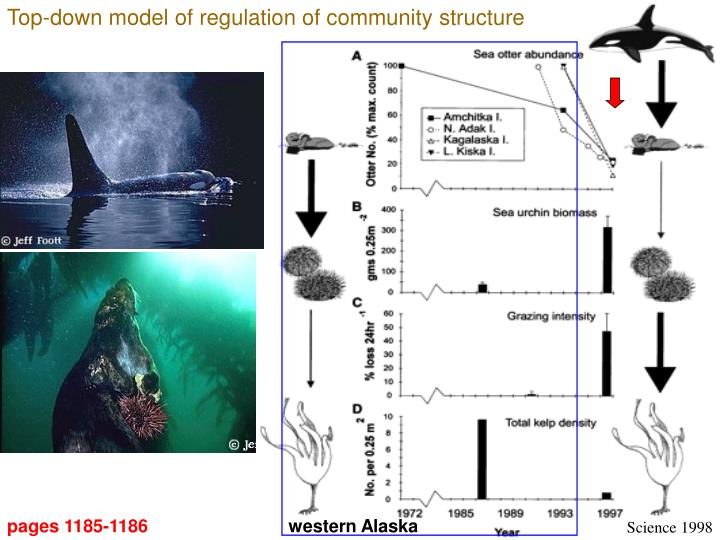 Top-down model of regulation of community structure