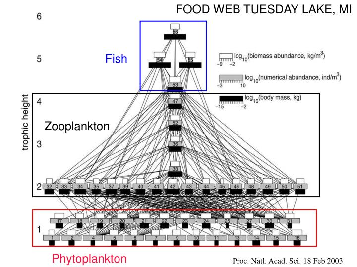 FOOD WEB TUESDAY LAKE, MI