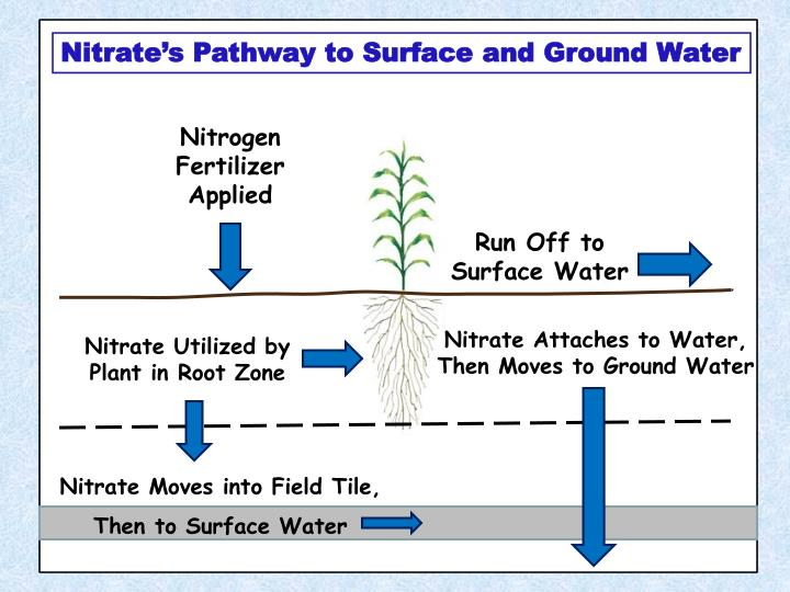 Nitrate's Pathway to Surface and Ground Water