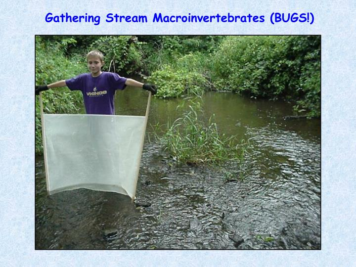 Gathering Stream Macroinvertebrates (BUGS!)