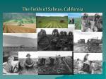 the fields of salinas california