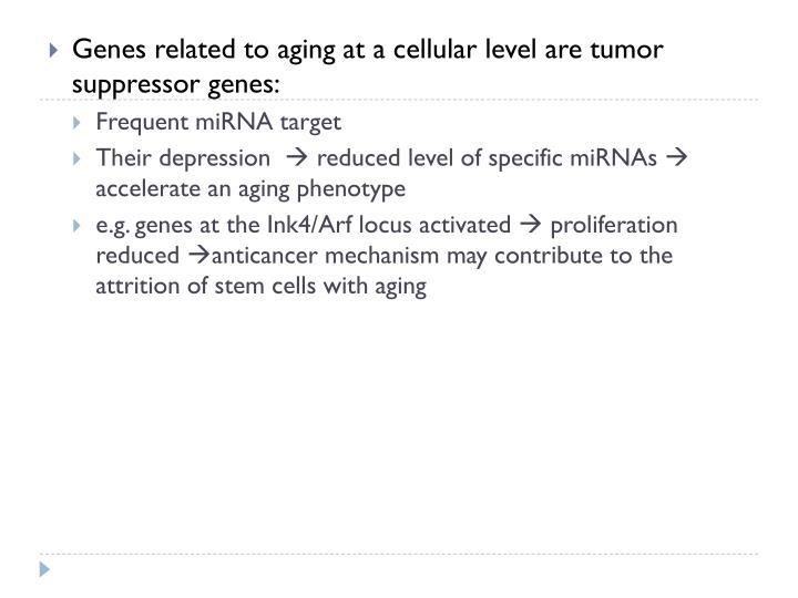 Genes related to aging at a cellular level are tumor suppressor genes: