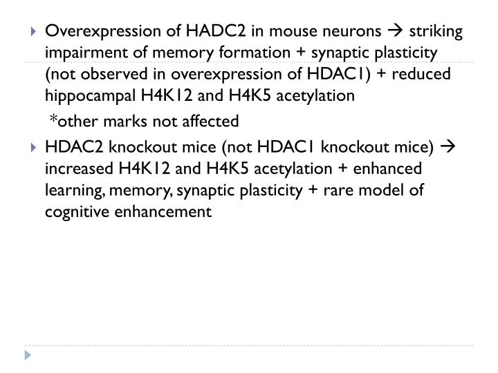 Overexpression of HADC2 in mouse neurons