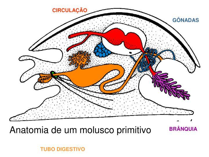 CIRCULAÇÃO