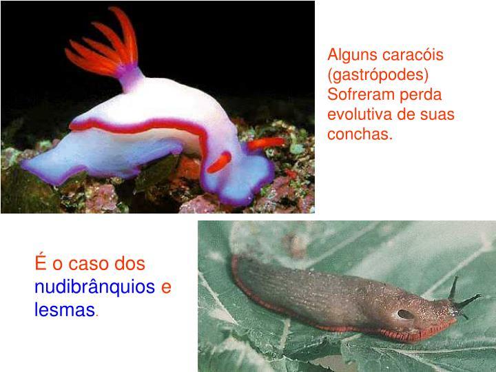 Alguns caracóis (gastrópodes)  Sofreram perda evolutiva de suas conchas.