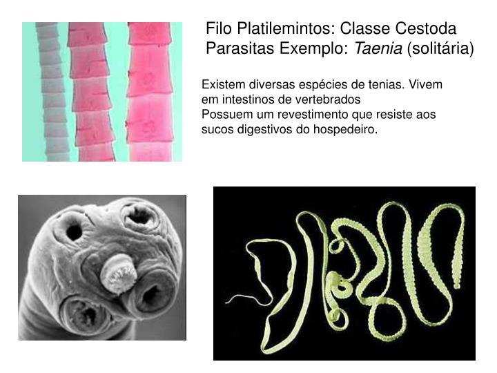 Filo Platilemintos: Classe Cestoda