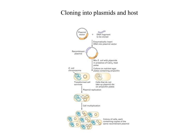 Cloning into plasmids and host