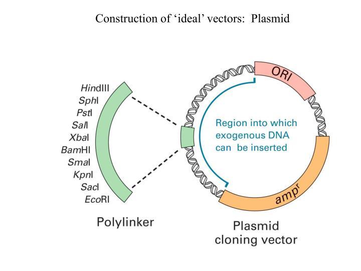 Construction of 'ideal' vectors:  Plasmid