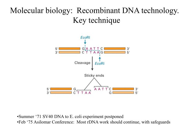 Molecular biology:  Recombinant DNA technology.