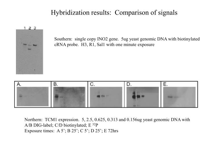 Hybridization results:  Comparison of signals