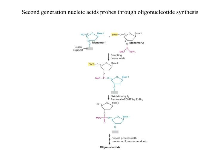 Second generation nucleic acids probes through oligonucleotide synthesis