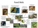 food web