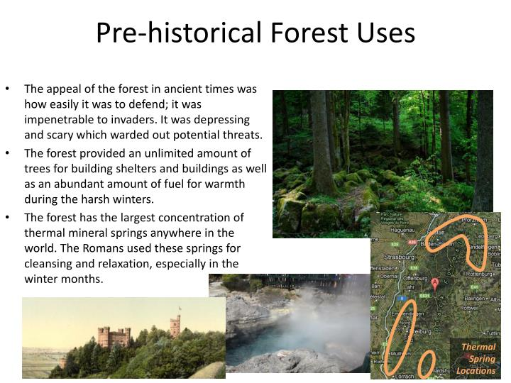Pre-historical Forest Uses