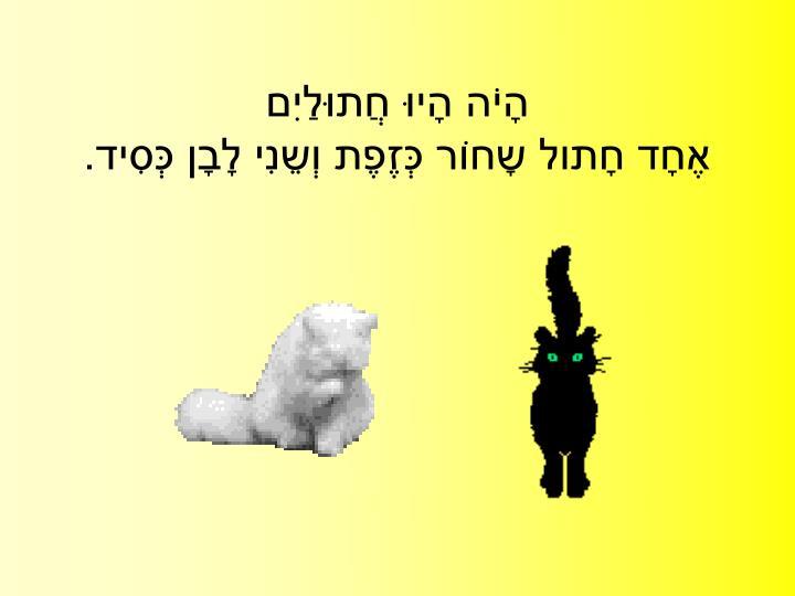 הָיֹה הָיוּ חֲתוּלַיִם