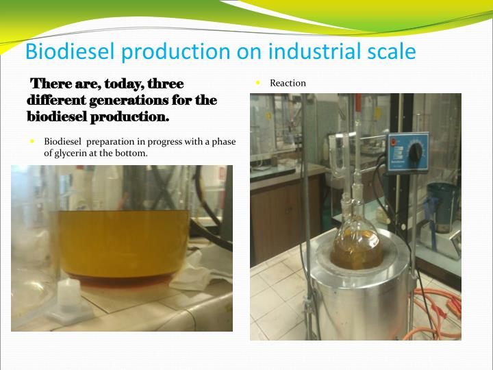 Biodiesel production on industrial scale