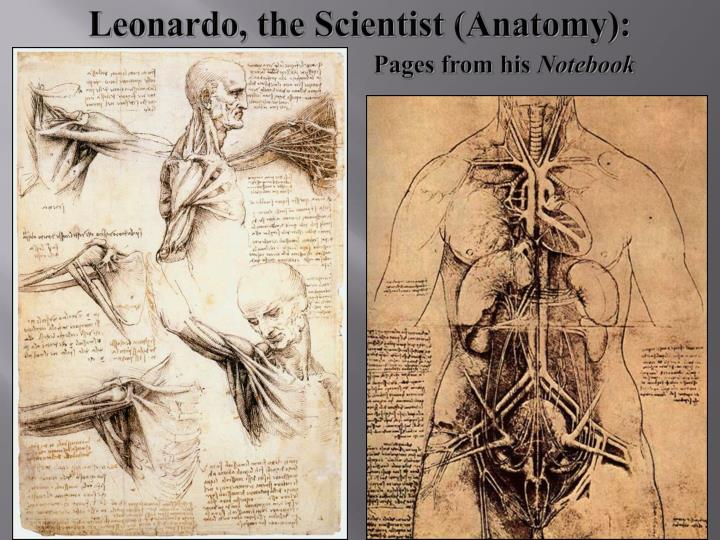 Leonardo, the Scientist (Anatomy):