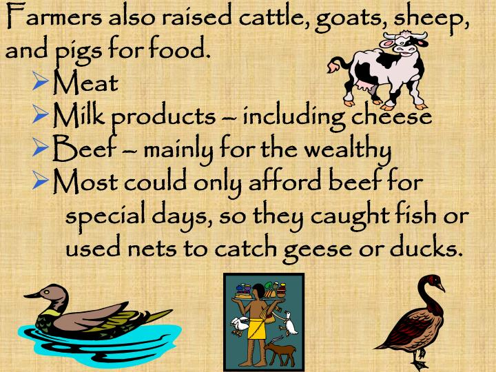 Farmers also raised cattle, goats, sheep,