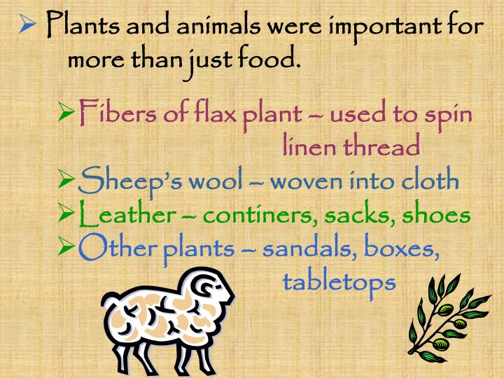 Plants and animals were important for