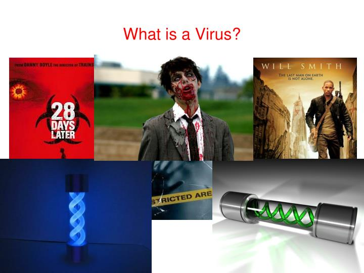 What is a virus