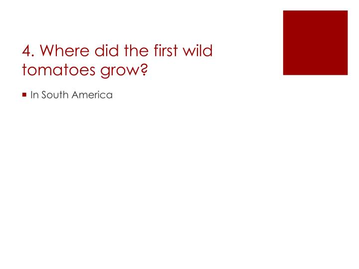 4. Where did the first wild tomatoes grow?