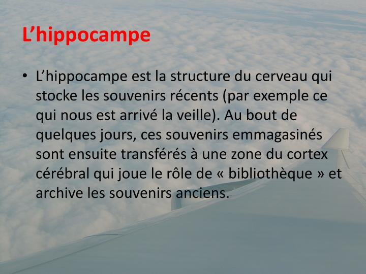 L'hippocampe