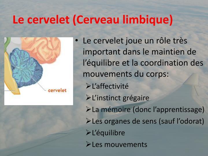Le cervelet (Cerveau limbique)