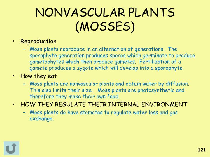 NONVASCULAR PLANTS (MOSSES)