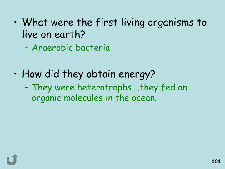 What were the first living organisms to live on earth?