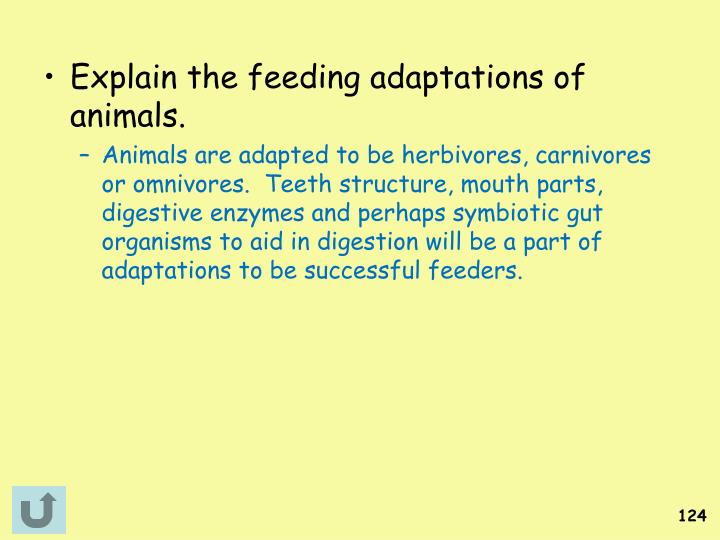 Explain the feeding adaptations of animals.