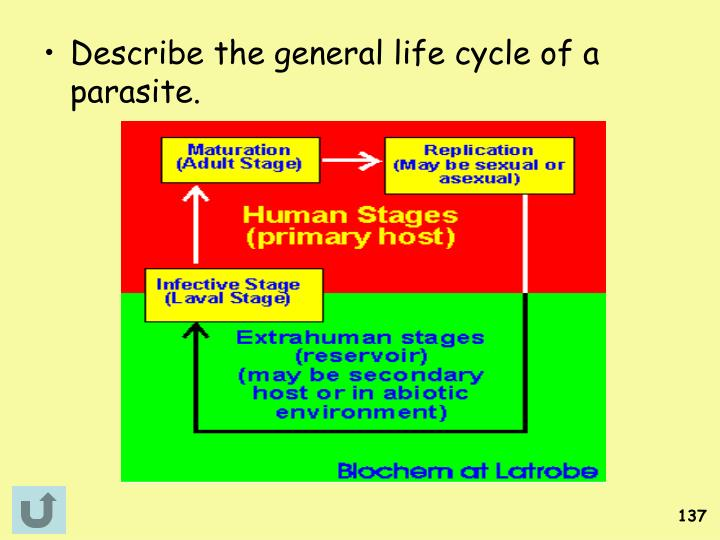 Describe the general life cycle of a parasite.
