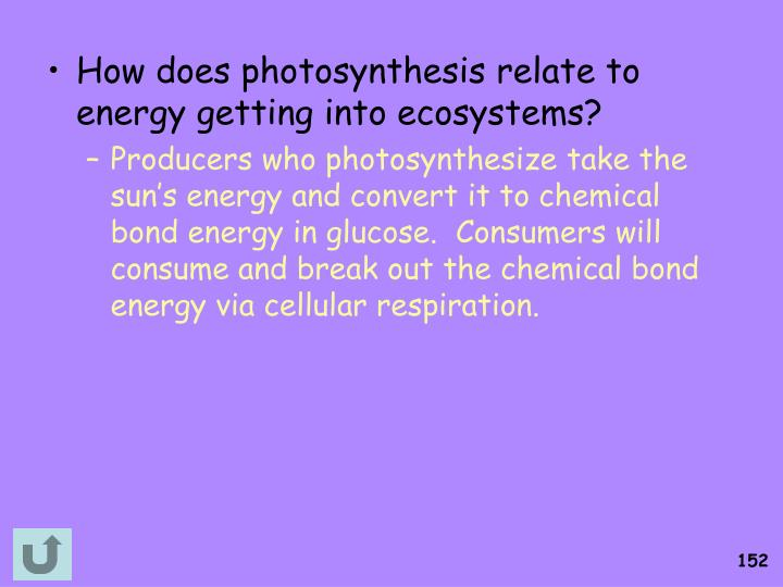How does photosynthesis relate to energy getting into ecosystems?