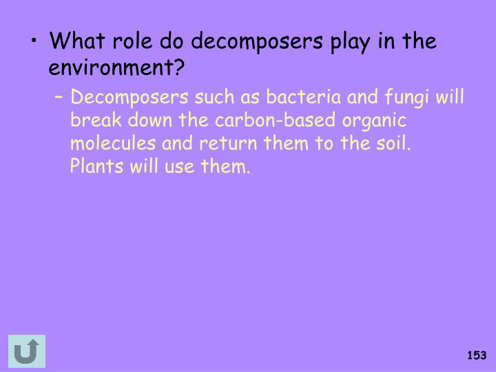 What role do decomposers play in the environment?