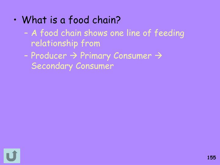 What is a food chain?