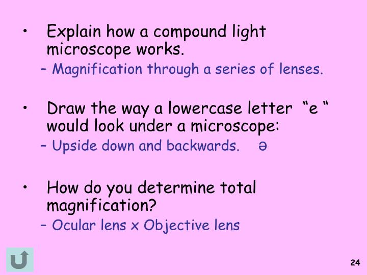 Explain how a compound light microscope works.
