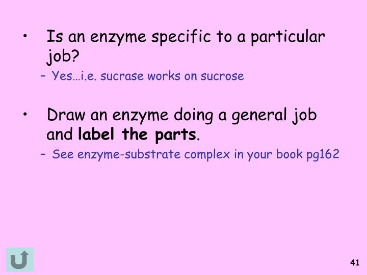 Is an enzyme specific to a particular job?