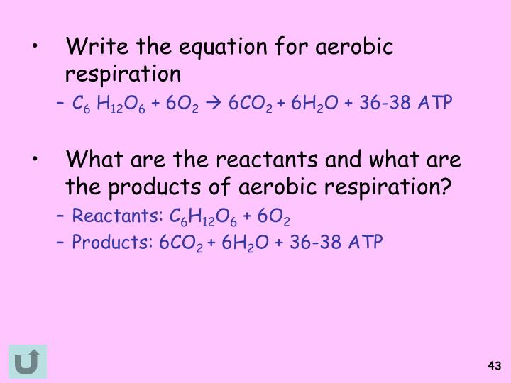 Write the equation for aerobic respiration