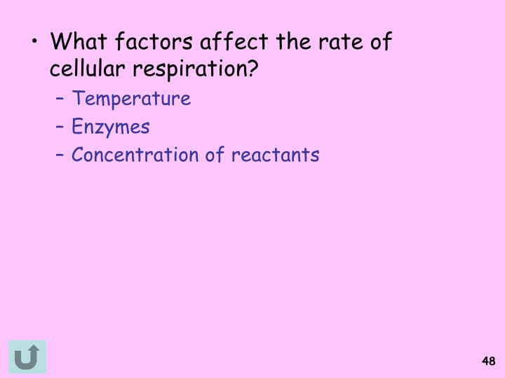 What factors affect the rate of cellular respiration?