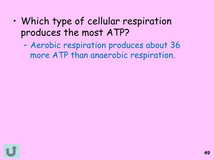 Which type of cellular respiration produces the most ATP?